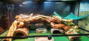 Reptiles Carpet for bearded dragon