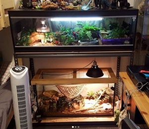best size terrarium for bearded dragon