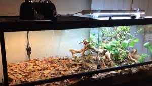 best substrate for bearded dragon egg laying