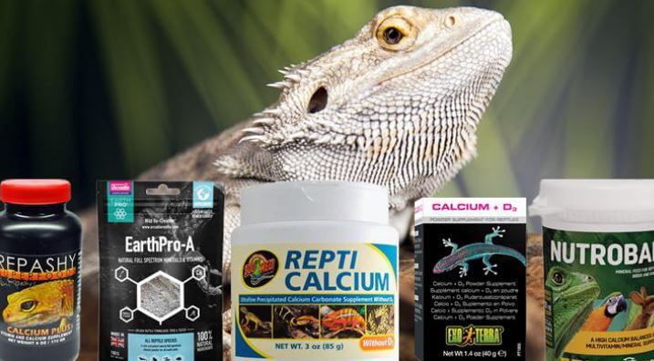 Hypervitaminosis D In Bearded Dragons