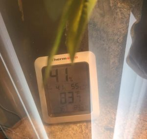 bearded dragon tank thermometer