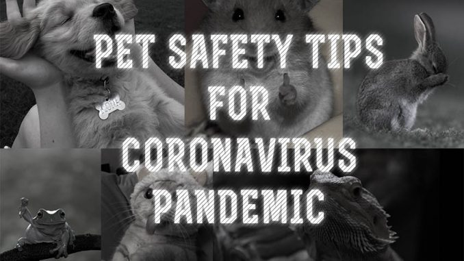 Pet Safety Tips For Coronavirus Pandemic