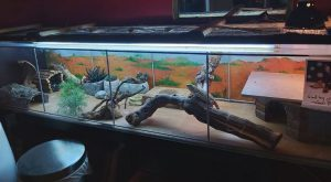 bearded dragon heat lamp setup