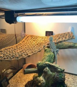 bearded dragon infrared heat lamp