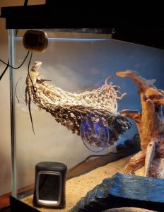 bearded dragon lamp setup