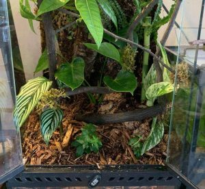 best substrate for a leopard gecko