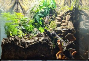 bioactive substrate for leopard geckos