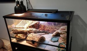 night heat lamp for bearded dragon