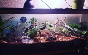 what kind of substrate for leopard gecko