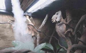 best humidifier for reptile room