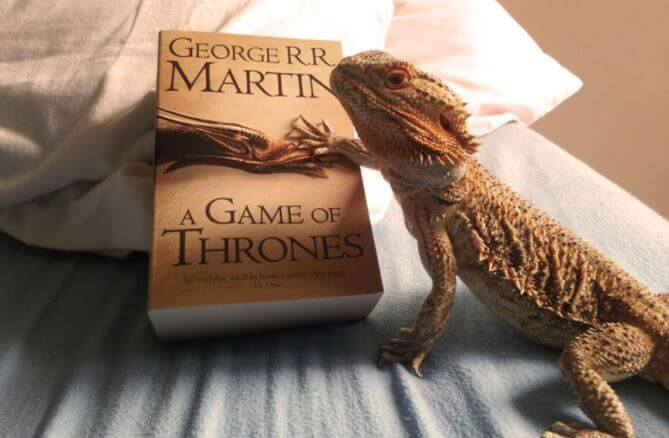 Bearded Dragon Books For Sale