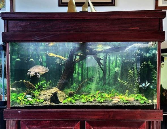 Live Plants For Turtle Tank