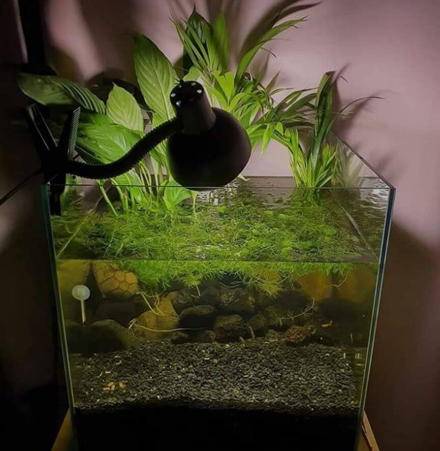 Real Plants For Turtle Tank