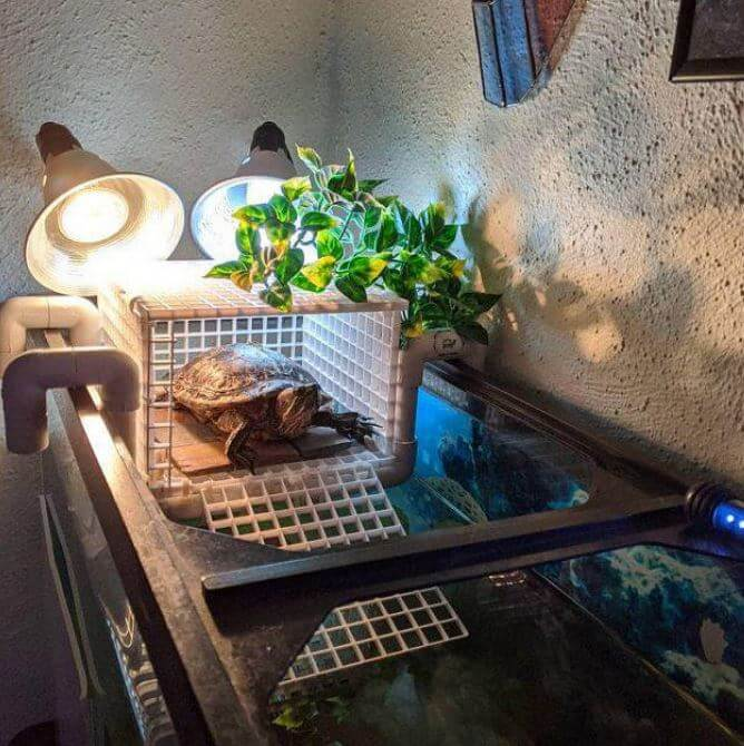 Turtle Basking Platform Diy