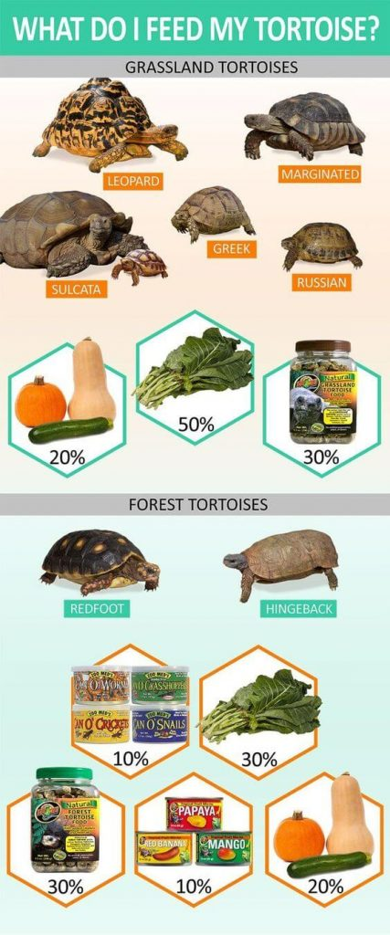 Best Food For Sulcata Tortoise