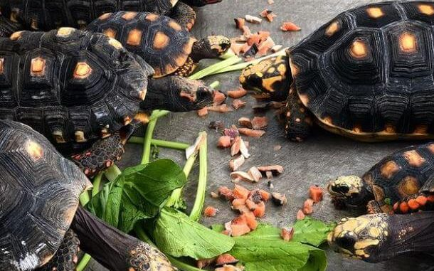 Best Food For Tortoise