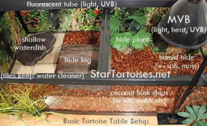 Best Enclosure For Russian Tortoise