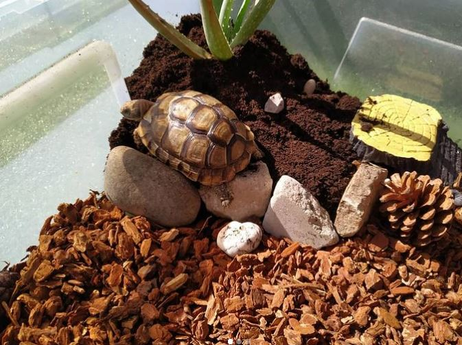 Best Substrate For Baby Leopard Tortoise