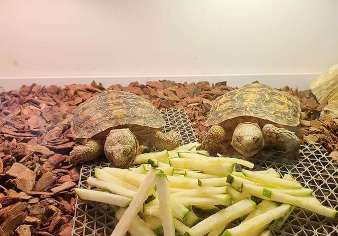 Best Substrate For Baby Tortoise