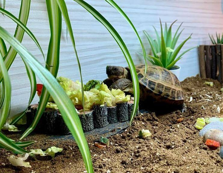 Best Substrate For Outdoor Tortoise Enclosure