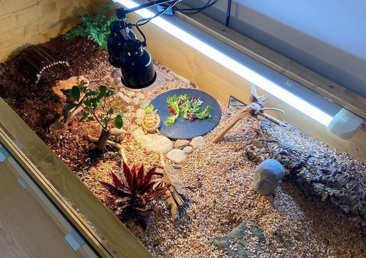 Best Substrate For Tortoise Enclosure