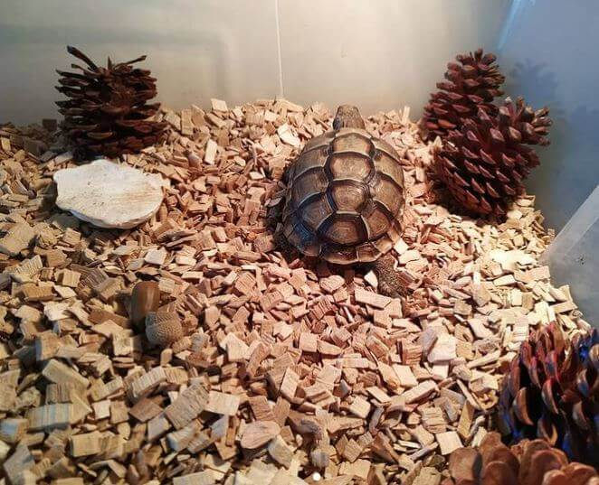 Leopard Tortoise Best Substrate