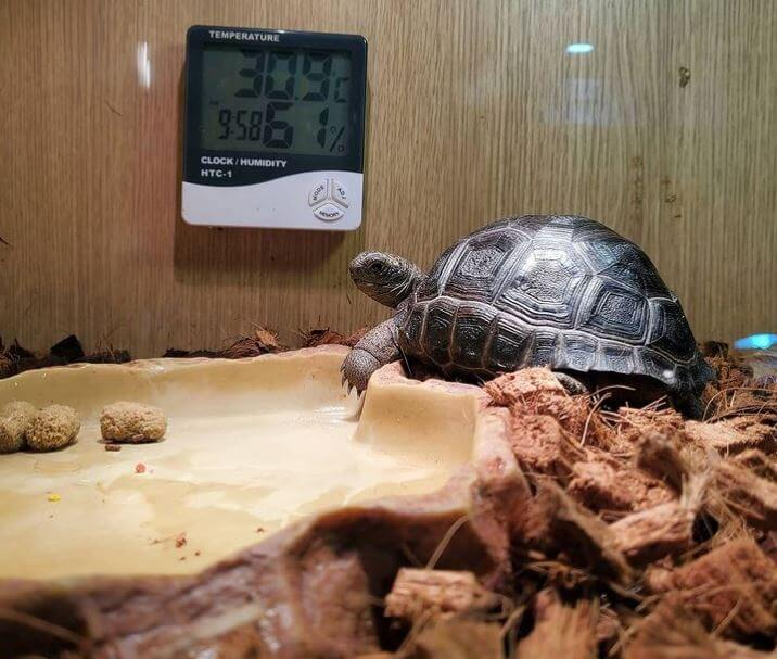 Substrate For Russian Tortoise