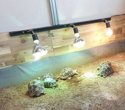 What Is The Best Heat Lamp For a Tortoise