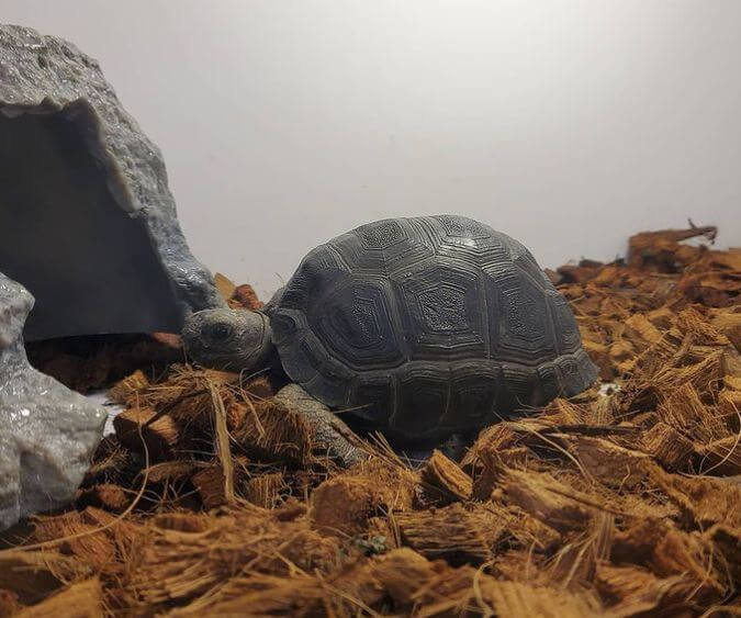 What Is The Best Substrate For Leopard Tortoise