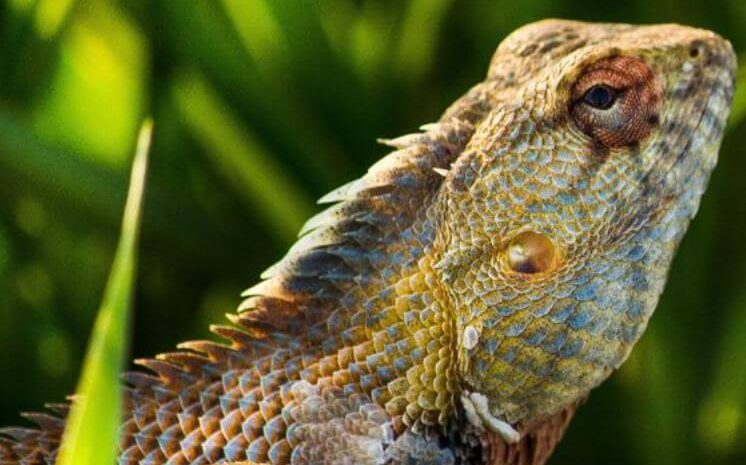 Best Plants For Bearded Dragon Cage
