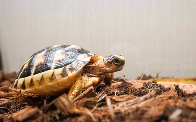 Best Substrate For Leopard Tortoise