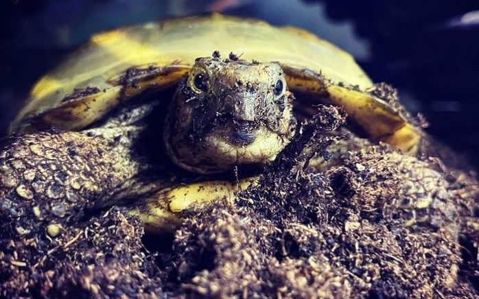 Best Substrate For Russian Tortoise