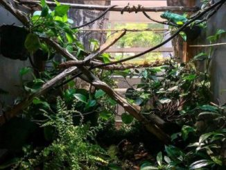 How to Raise Humidity in Chameleon Cage
